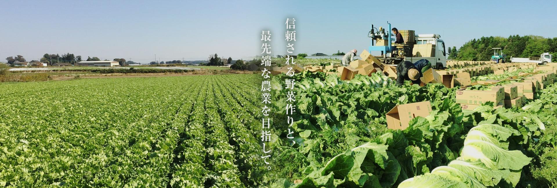 信頼される野菜作りと、最先端な農業を目指して。